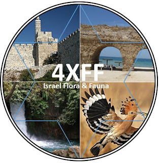 Click on logo for 4XFF Website