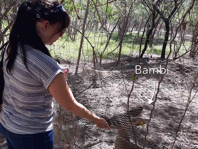 Girl feeds buck in El Fuerte
