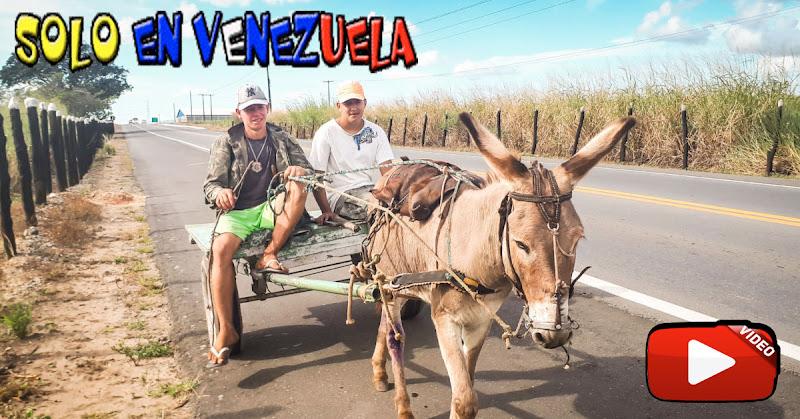 En Puerto la Cruz la gente se debe transportar en Burro por falta de gasolina