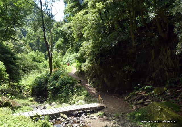 bosques tipo selva en las islas Azores