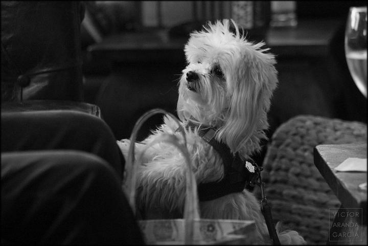 perro,valencia,cafe_de_las_luces,fotografia