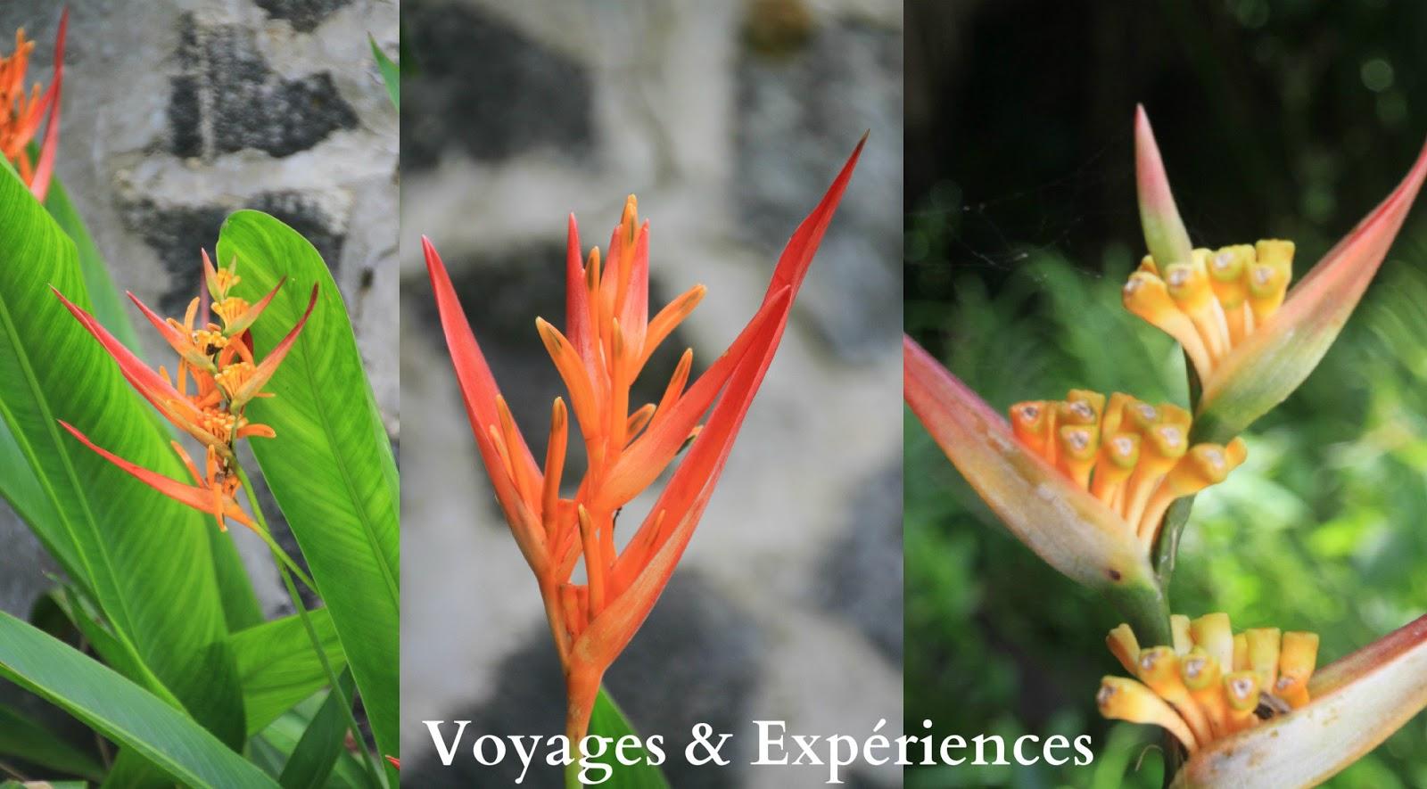 Exceptionnel Voyages et Expériences : Fleurs de l'Ile Maurice: Beautés de la  SR61