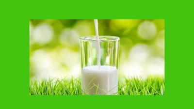 Susu organik untuk optimalkan berat badan anak