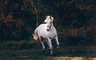 घोड़ा के बारे में जानकारी ▷ some facts about horse in hindi
