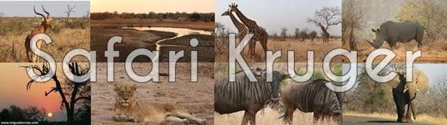 Safari por libre en Kruger