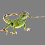 lizard in spanish