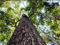 10 strange tree society  of the world