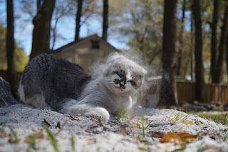 gato con arena