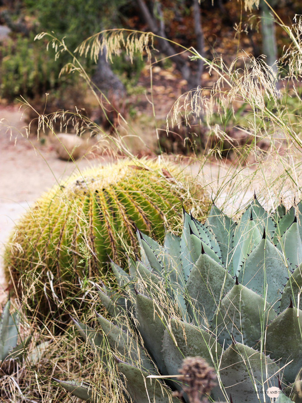 Desert Garden San Diego