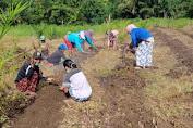 Pemdes Lengkong Nyadom Adakan Gotong royong Menanam Sayuran Bersama TP-PKK Desa