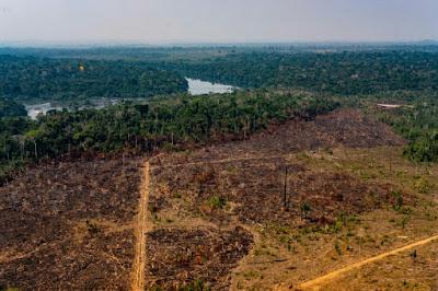 Investidores querem resultado e governo busca reduzir desmatamento