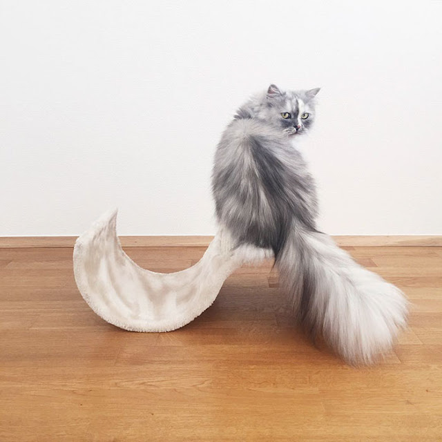 Meet Alice, An Adopted Cat With The World's Most Beautiful Marble Fur