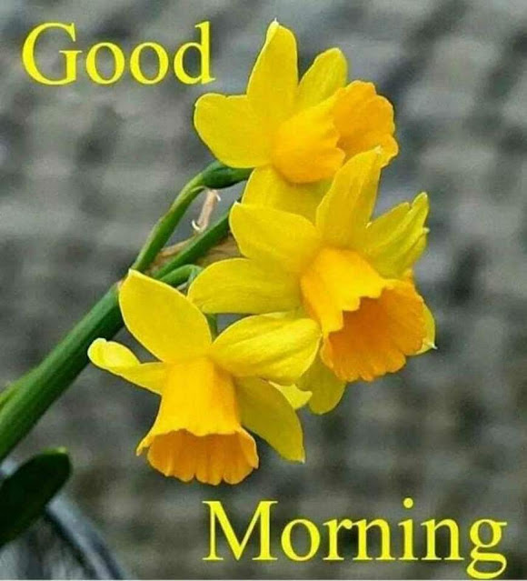 Good Morning flower Wishes for Whatsapp