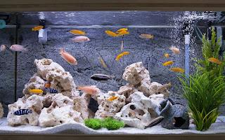 معنى حلم حوض السمك