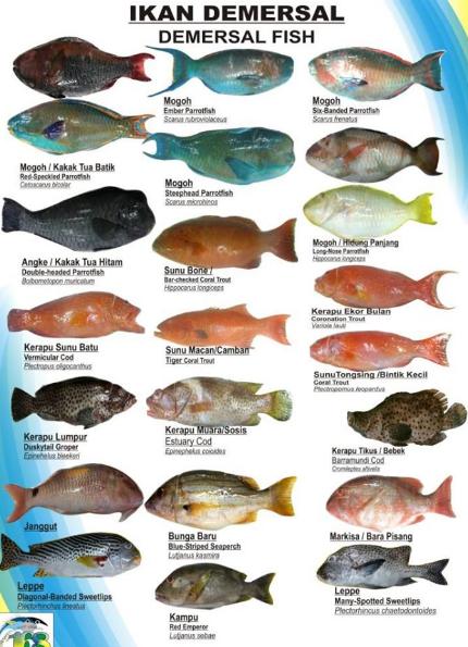 Ciri Ciri Ikan Demersal Ikan Dan Laut