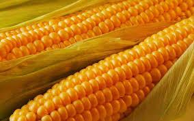 اهمية الذرة الصفراء للقلب والعضلات .