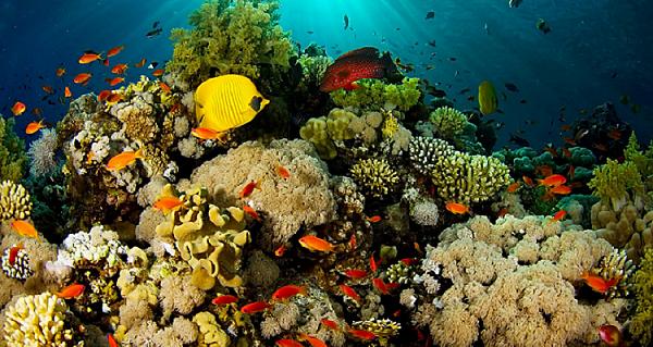 Keseruan Liburan  ke Taman Laut Bunaken Manado