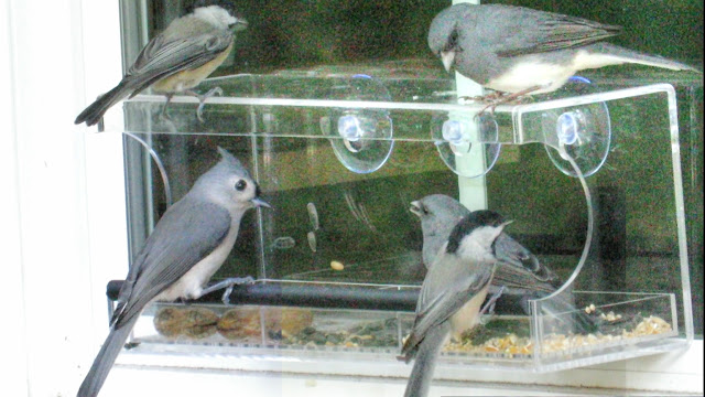 Chickadees, Tufted Titmice and Dark-Eyed Junco Love Clear Window Feeders