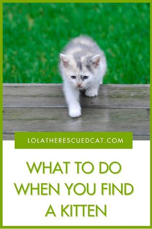 I found a kitten, what do I do?