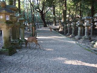 il sentiero delimitato dalle lanterne di pietra, dove pascolano solo i cervi