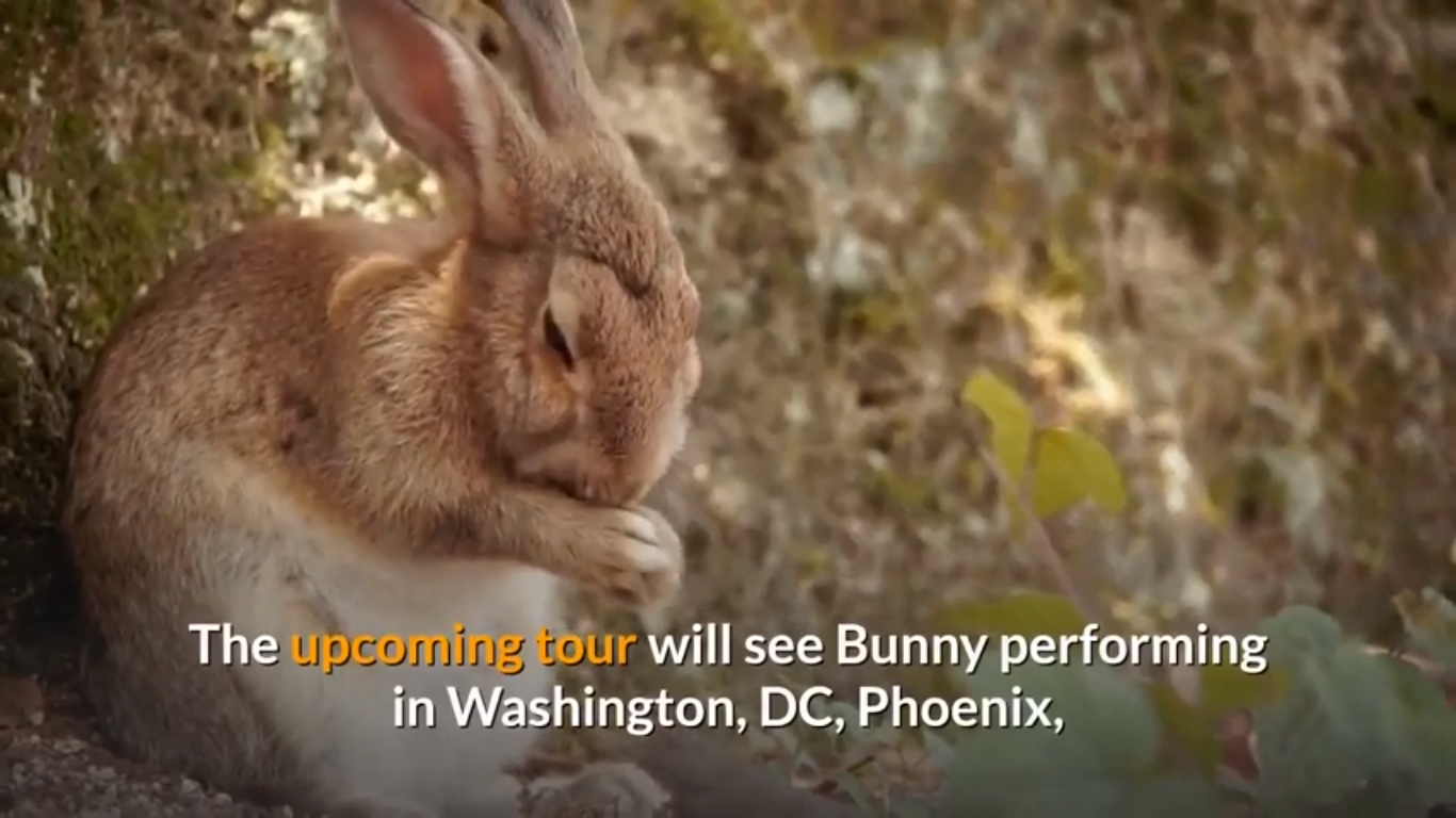 """Poor Bunny declared he will be actually visiting in 2022.  El Último Scenic tour del Mundo 2022 (The Final Globe Scenic tour 2022) — called for his 2020 cd of the exact very same title — starts on Feb. 9, 2022, in Denver, observed through a Feb. 11 present at the Put on Haskins Facility in El Paso.  The statement online video, which Poor Bunny discussed on Instagram, components WWE celebrity Three-way H — that applauded the musician for his """"unbelievably effort and also work"""" to prepare for his expert battling efficiency.  """"You carried out fantastic at WrestleMania today, it is opportunity for you to carry out exactly just what you perform,"""" Three-way H says to the vocalist in the statement online video, prior to handing him a yellowish suitcase.  The reggaeton musician won Greatest Latin Stand out Or even City Cd for """"YHLQMDLG"""" at the 63rd Grammy Honors, noting his very initial job Grammy gain.  Here is exactly just what you have to find out about the forthcoming scenic tour:  Where may I receive Poor Bunny tickets? Tickets are going to happen purchase on April 16 at 12 p.m., inning accordance with an Instagram blog post coming from Poor Bunny.  Enthusiasts may acquisition tickets on seatgeek.com.  Where are going to be actually Poor Bunny participate in? Poor Bunny are going to dip into the Put on Haskins Facility for his El Paso, Texas present on Feb. 11."""