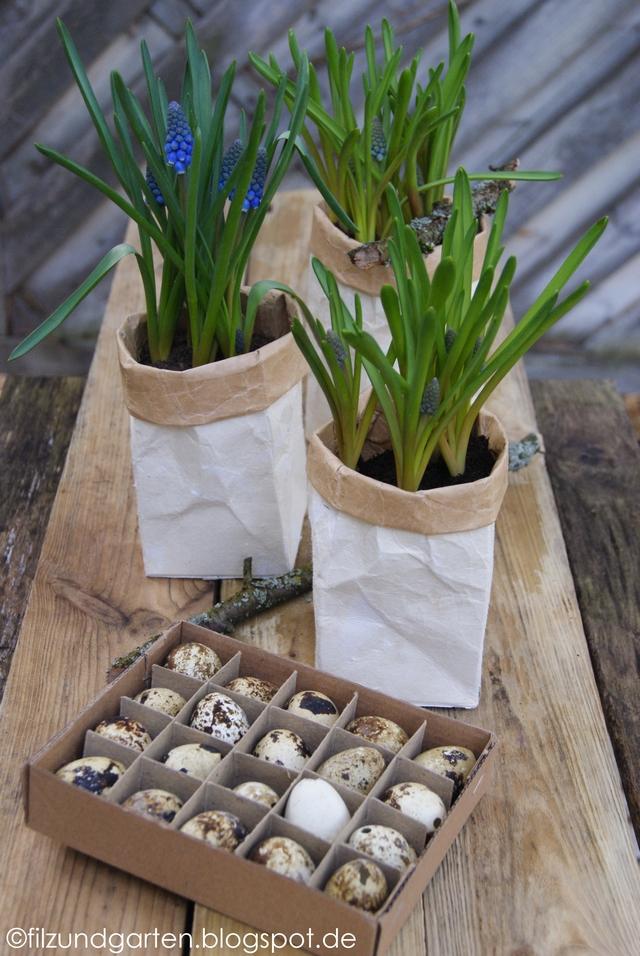 Milchtütengefäße mit Traubenhyazinthen bepflanzen