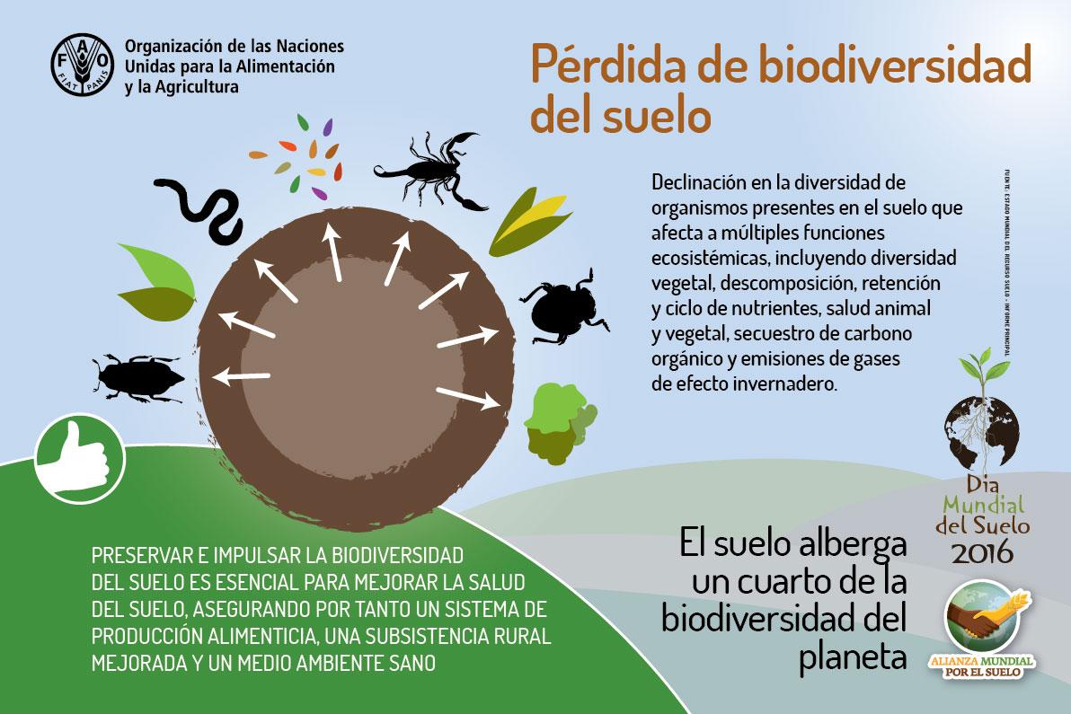Biovedruna recursos seguimos hablando de la importancia for Importancia de los suelos
