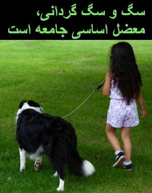 برخورد جدی با سگ گردانی مطالبه مردم است