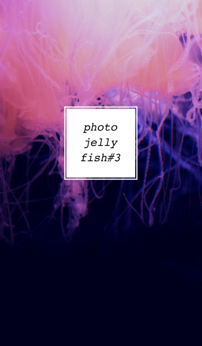 PHOTO-JELLYFISH#3