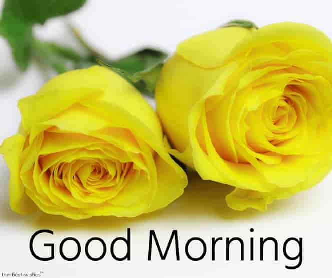 good morning pictures with yellow roses