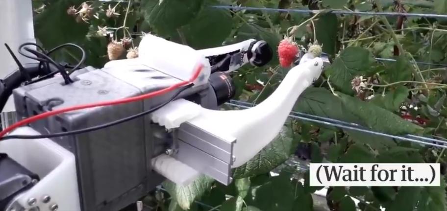 World's First Raspberry Harvester - Age of Robotics on Farming begins