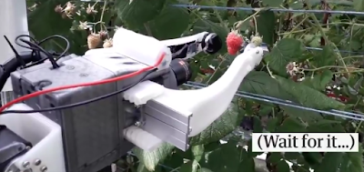 World's First Raspberry Harvester - Age of Robotics on Farming begins
