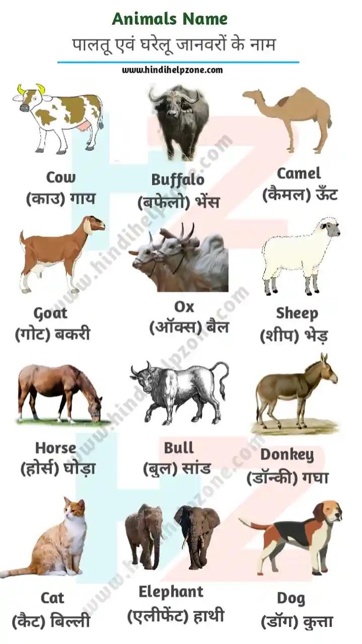 All Animals Name List In Hindi And English - (pdf) - जानवरों (पशुओं) के नाम