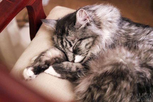 Katten Vifslan, photo by Alicia Sivertsson, 2016.