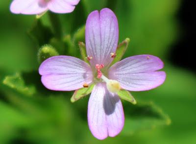 花弁の拡大写真