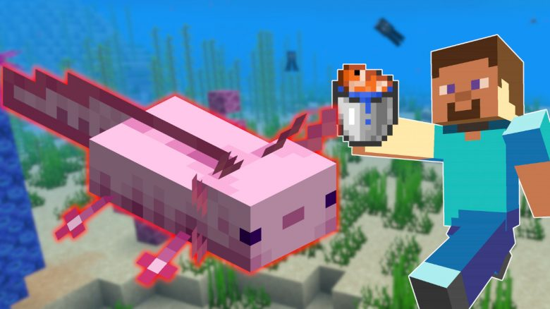 Players want to tame axolotl in Minecraft - so you catch them