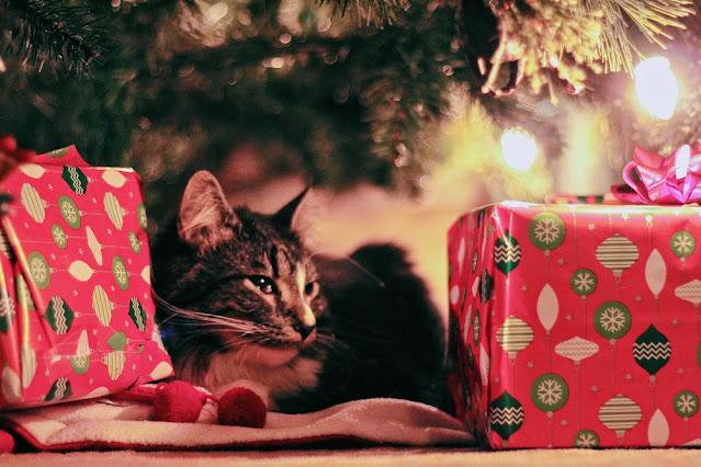 cadeaux pour chat