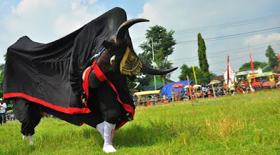 Mengenal Tradisi Bantengan di Jawa Timur