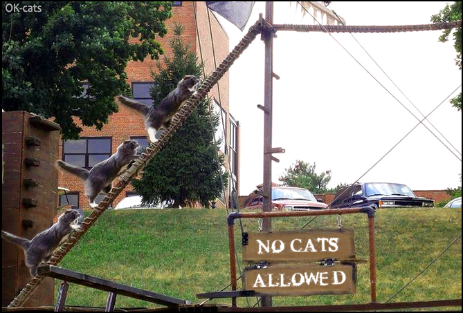 Photoshopped Cat picture • No cats allowed but 3 jerk cats don't give a single fuck!
