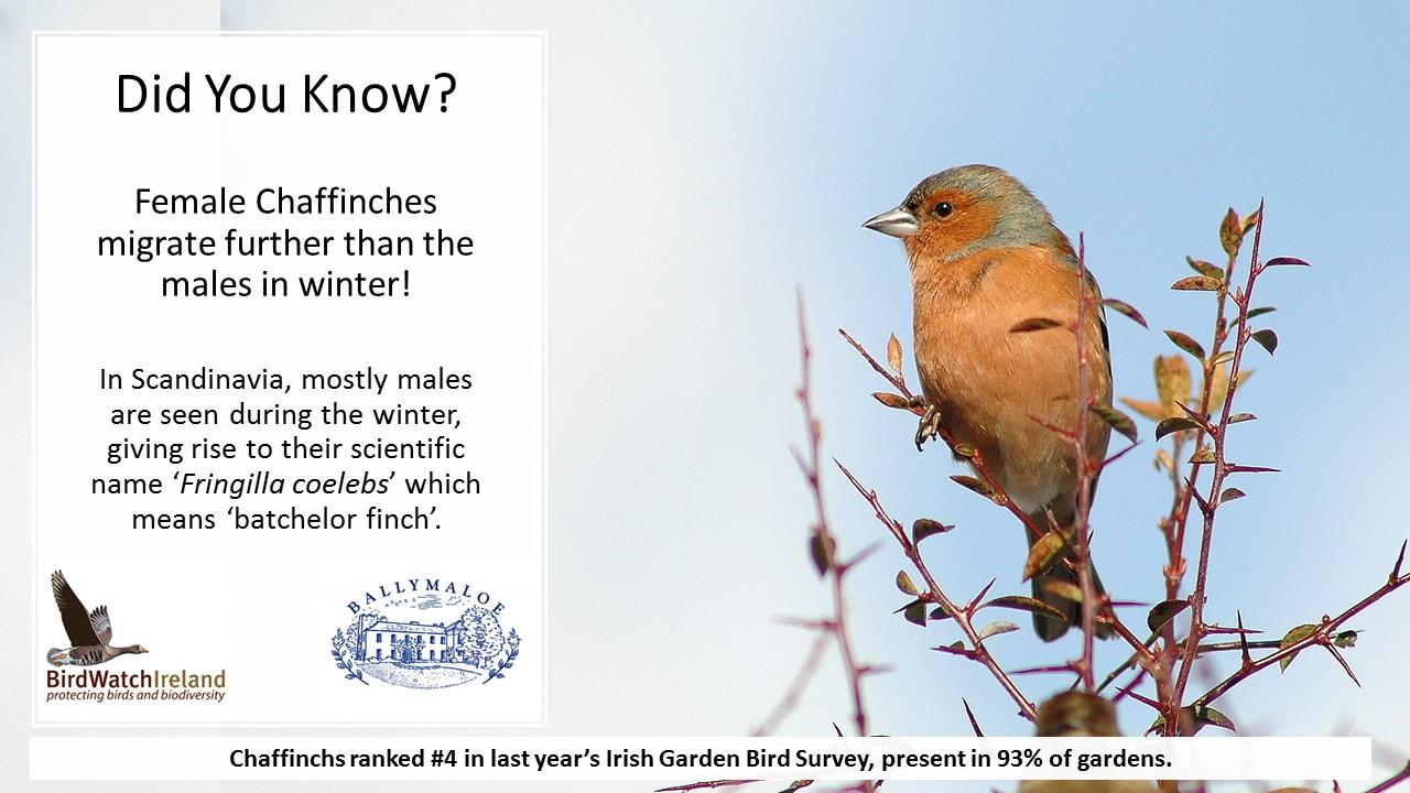 BirdWatch Ireland's Conservation Team blog