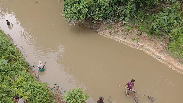Diduga Tercemar, Ribuan Ikan Terapung di Sungai Aek Riung