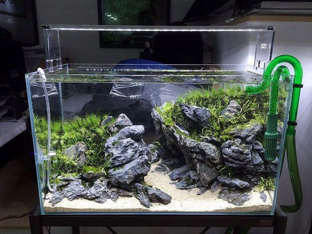 Membuat Aquarium Ikan Badut