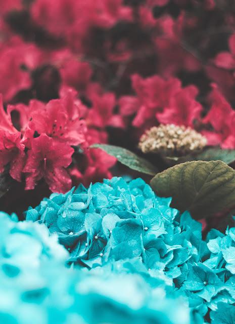 اجمل خلفيات الورد لشاشه الموبايل