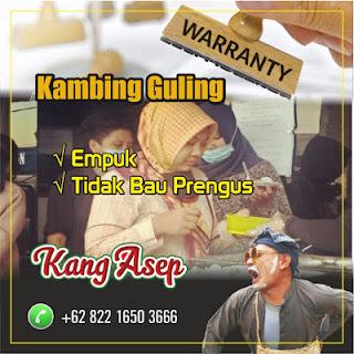 Kambing Guling Bandung Bergaransi, kambing guling bandung, kambing guling,