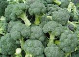 brócoli calabrese