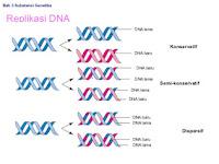 Materi Genetika : Gambar dan Penjelasan Replikasi DNA