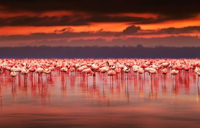 10 tourist destinations in pink throughout the world