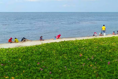 pantai sialang buah