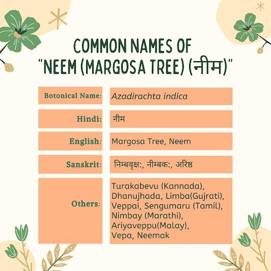 common names of Neem (Azadirachta Indica) Herbal Arcade