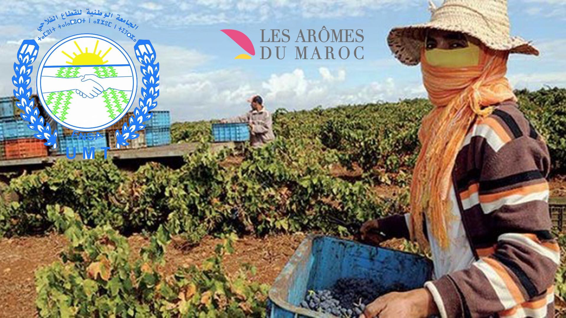 صورة لعاملة زراعية بإحدى الضيعات الفلاحية